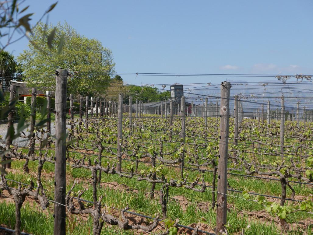 beste rode wijn uit Zuid-Afrika