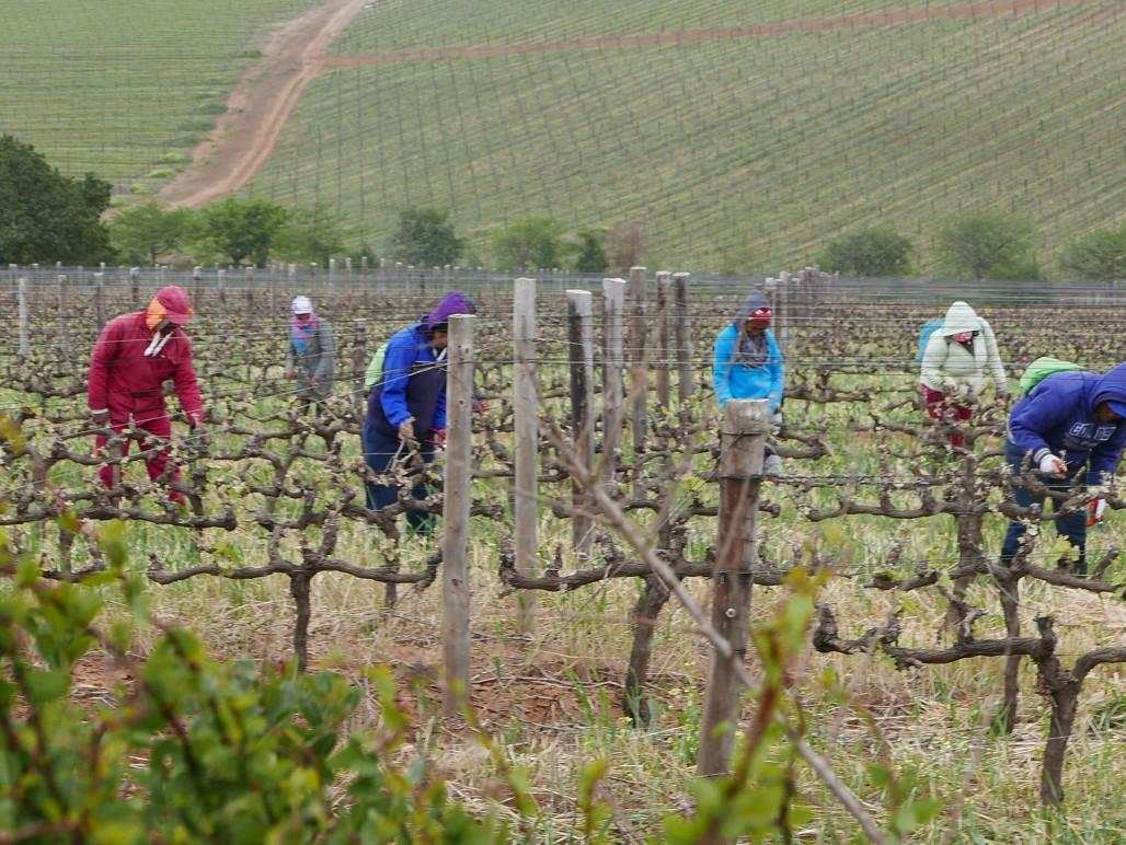 Werker op de winefarm