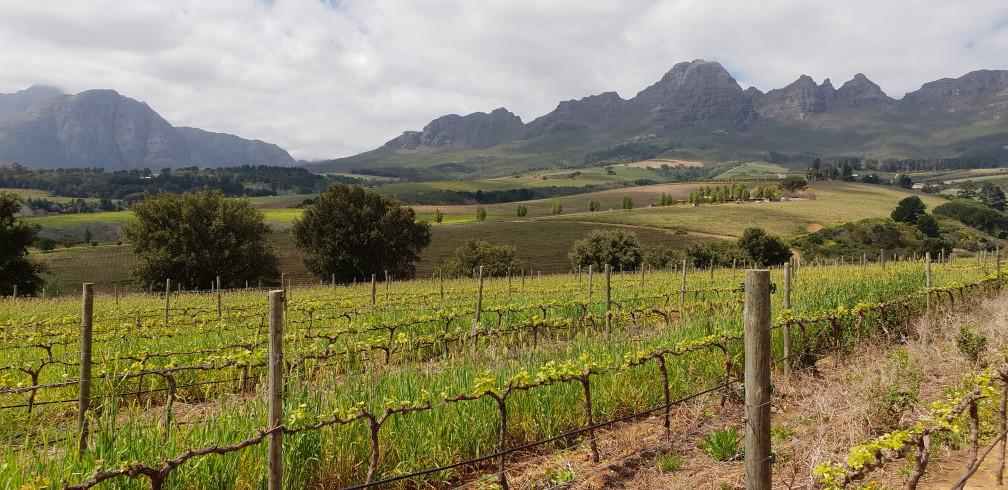 ons bezoek aan de zuid-afrikaanse wijndomeinen