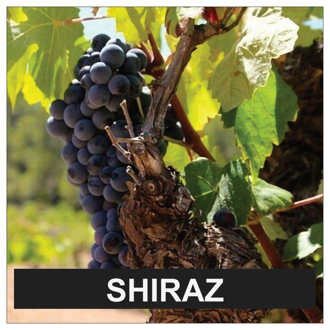 shiraz of syrah online bestellen