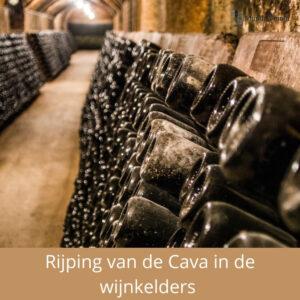 rijping van de cava in de wijnkelders