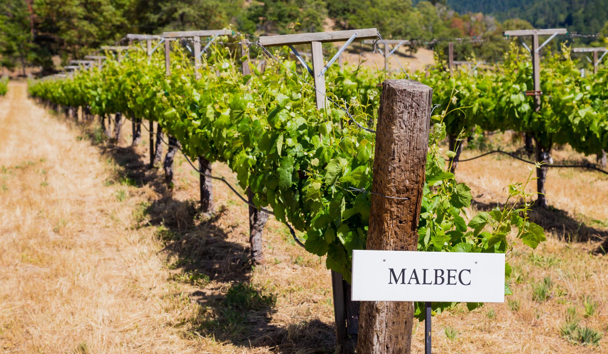 de smaak van een malbec wijn